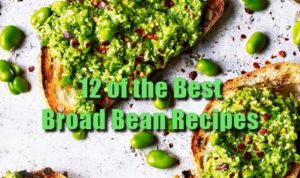 12 of the Best Broad Bean Recipes